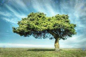 Притча о дереве исполнения желаний